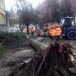 Olujni vetar u Majdanpeku čupao stabla iz korena