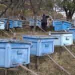 U Boljevcu ove godine povećane subvencije za pčelare