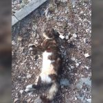 Otrovano 11 mačaka